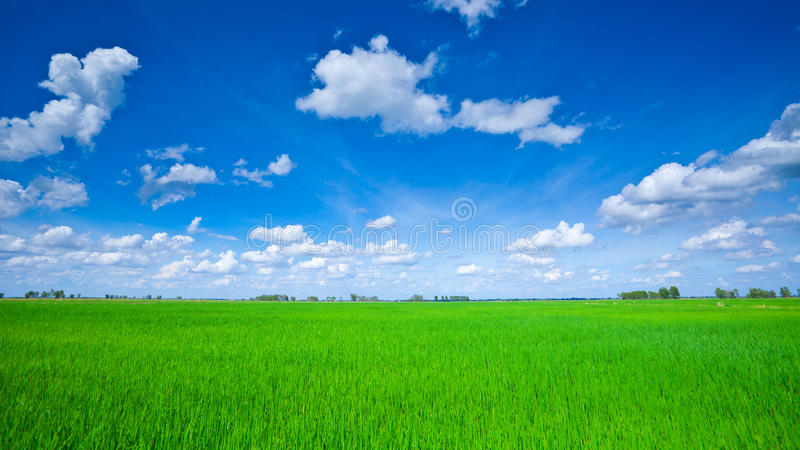 Groen gebied met blauwe hemel stock afbeelding