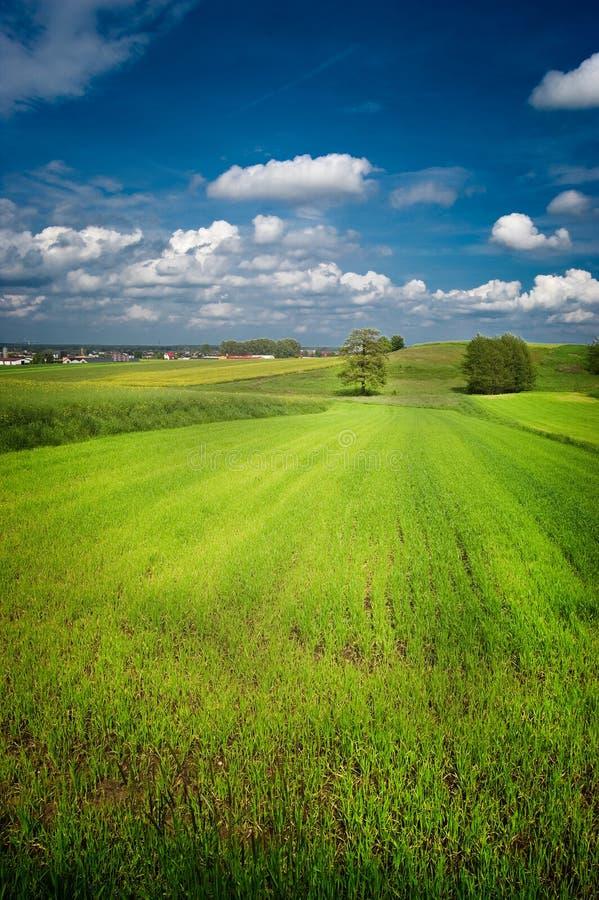 Groen gebied met blauwe hierboven hemel royalty-vrije stock fotografie