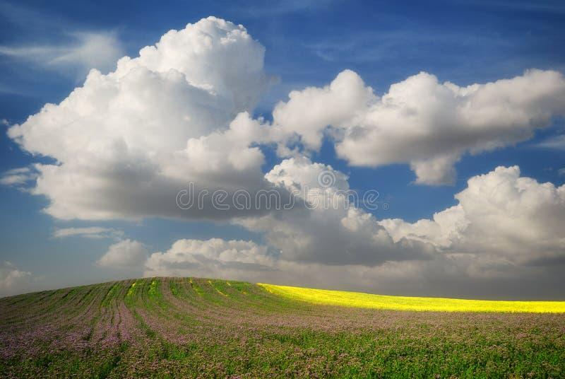 Groen gebied met bloemen en raapzaad onder blauwe bewolkte hemel royalty-vrije stock afbeelding