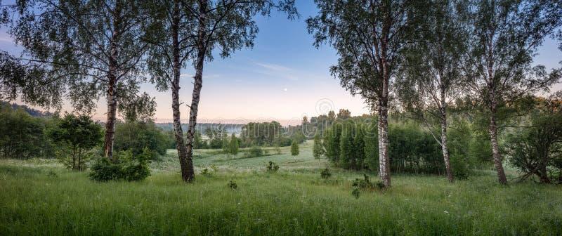Groen gebied met gele paardebloemen en blauwe hemel Panorama aan gras en bloemen op de heuvel op zonnige de lentedag royalty-vrije stock afbeeldingen