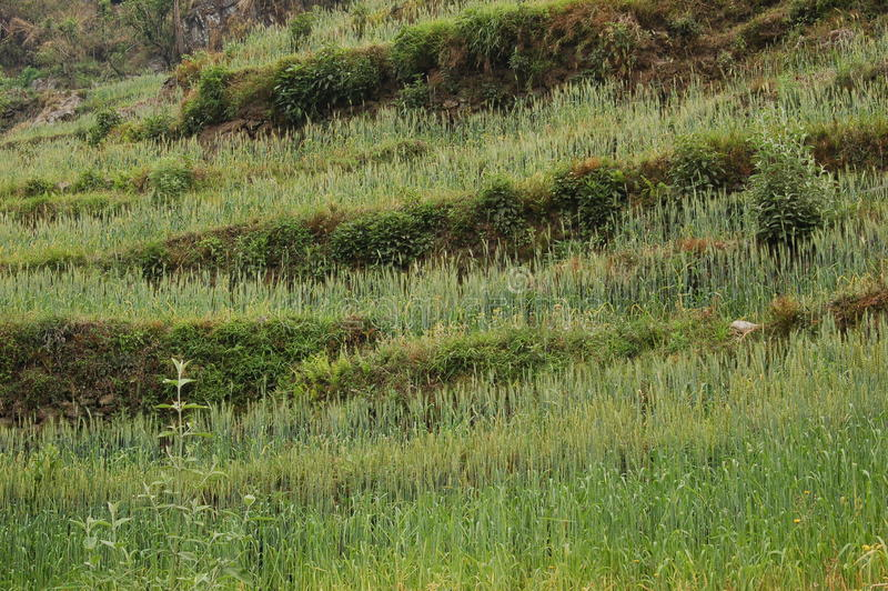 Groen Gebied in Nepal stock foto