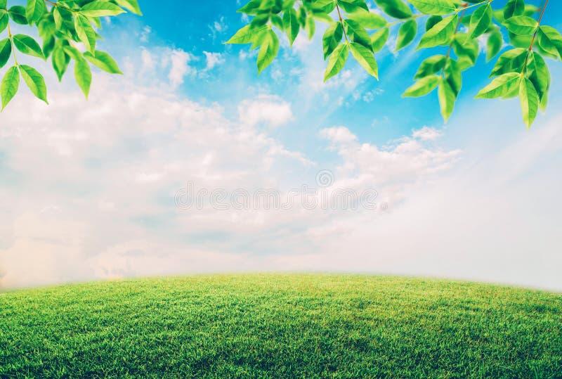 Groen gebied onder blauwe hemel met witte wolken en bladeren royalty-vrije stock foto