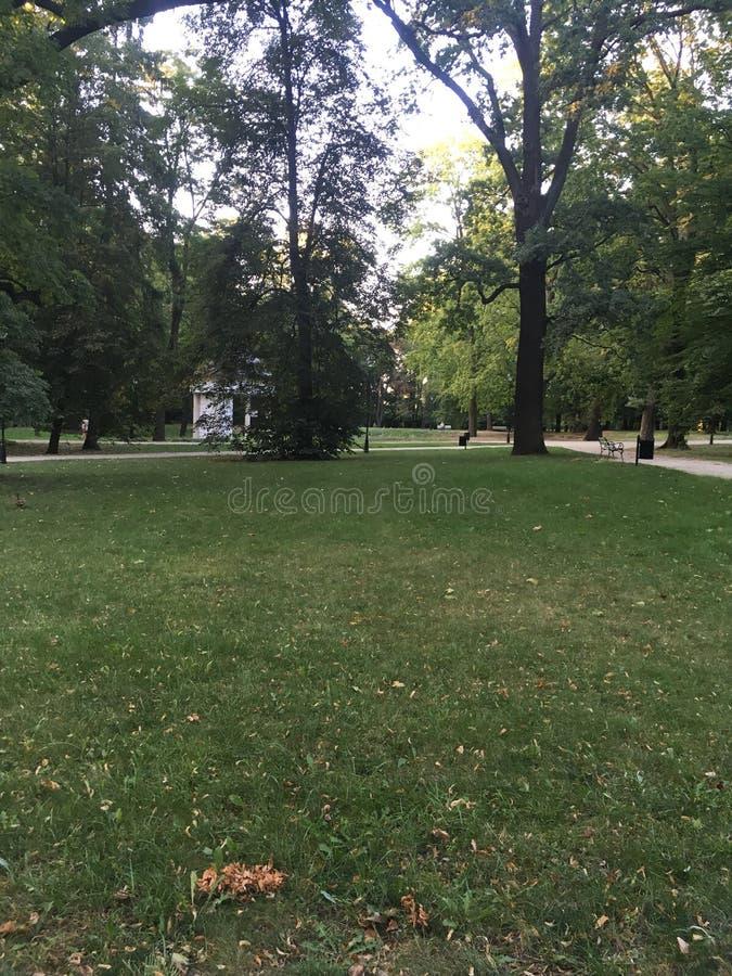 Groen gebied van gras binnen royalty-vrije stock afbeeldingen