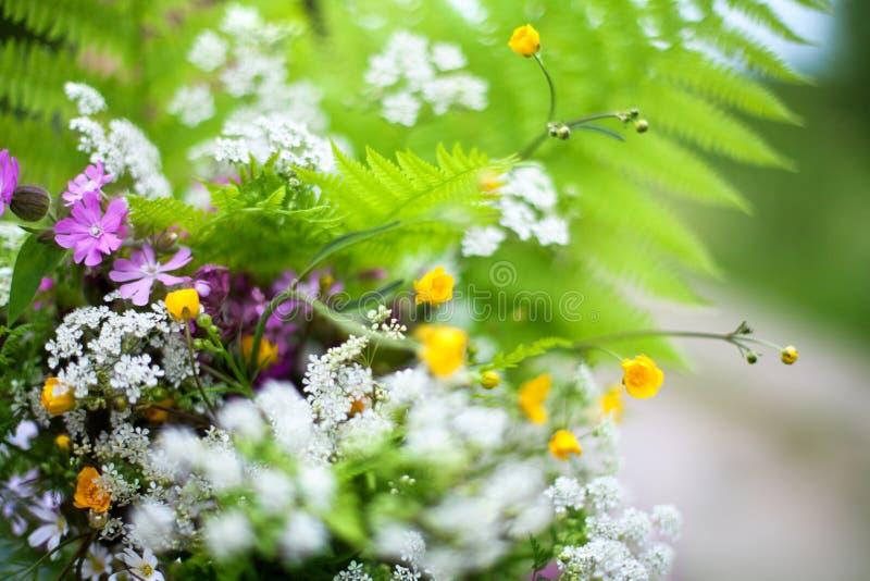 Groen gebiedsboeket van varenbladeren, velen verschillende kleine witte, gele, purpere wildflowers vage achtergrond dicht omhoog stock afbeelding