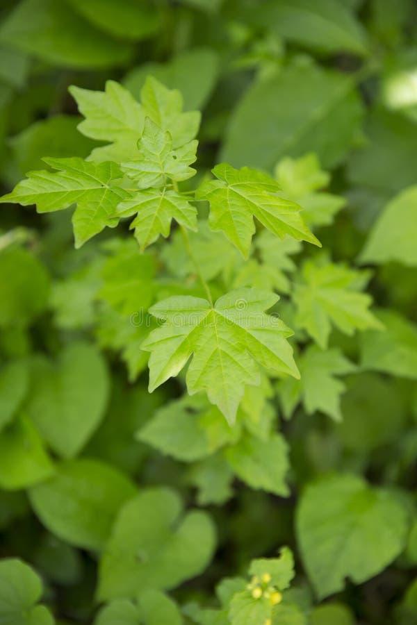 Groen gebladerte op een de lentedag royalty-vrije stock afbeeldingen