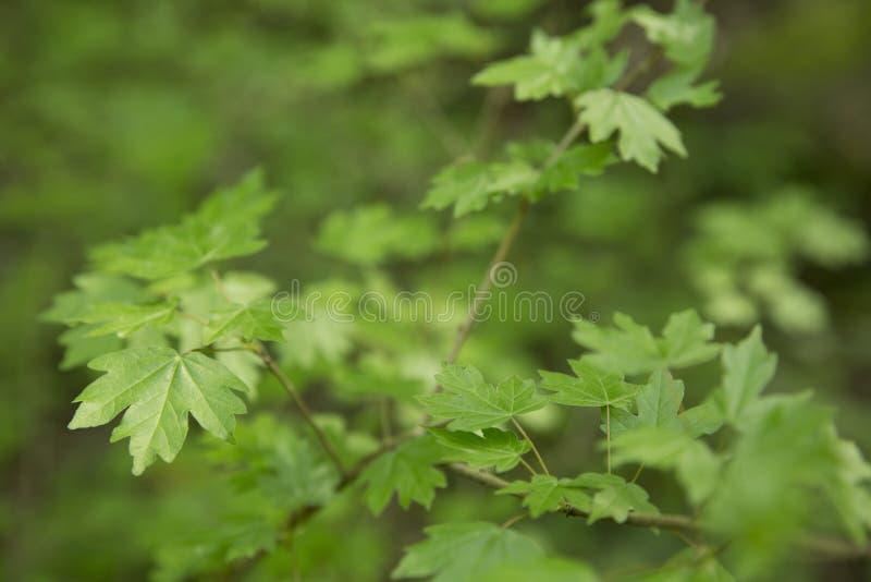 Groen gebladerte op een de lentedag stock fotografie
