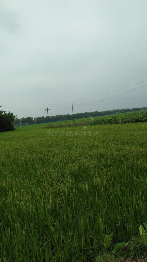 Groen gekweekt gebied stock fotografie