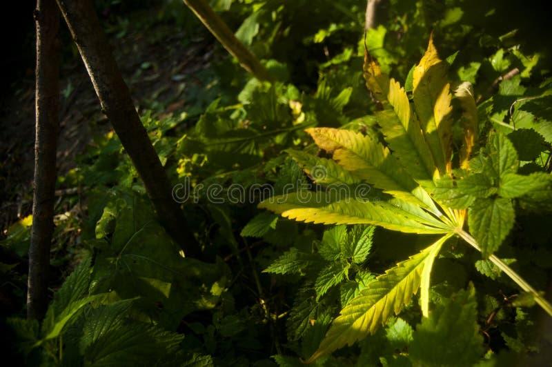 Groen gevallen blad stock afbeeldingen