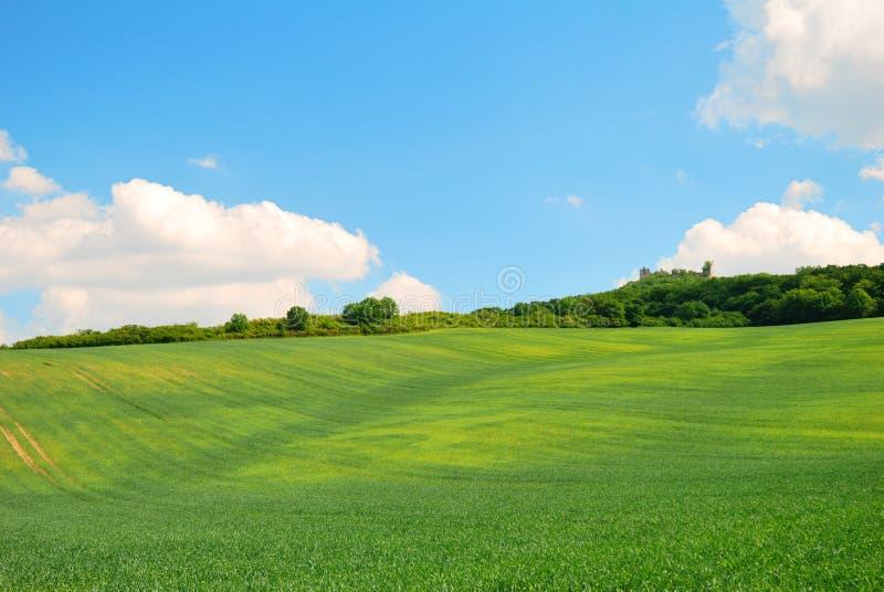 Groen golvend de lentegebied en blauwe hemel royalty-vrije stock afbeeldingen