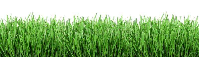 Groen gras royalty-vrije stock foto's