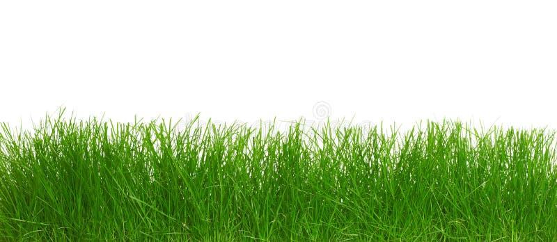 Groen gras. royalty-vrije stock afbeeldingen