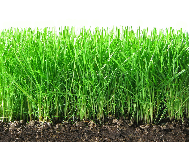 Groen gras. stock foto
