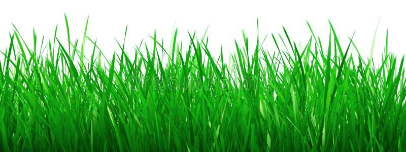 Groen gras