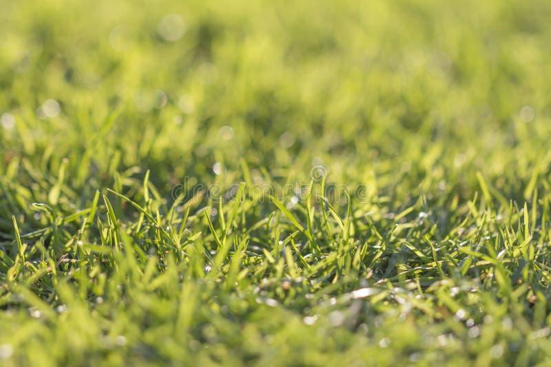 Groen gras royalty-vrije stock fotografie