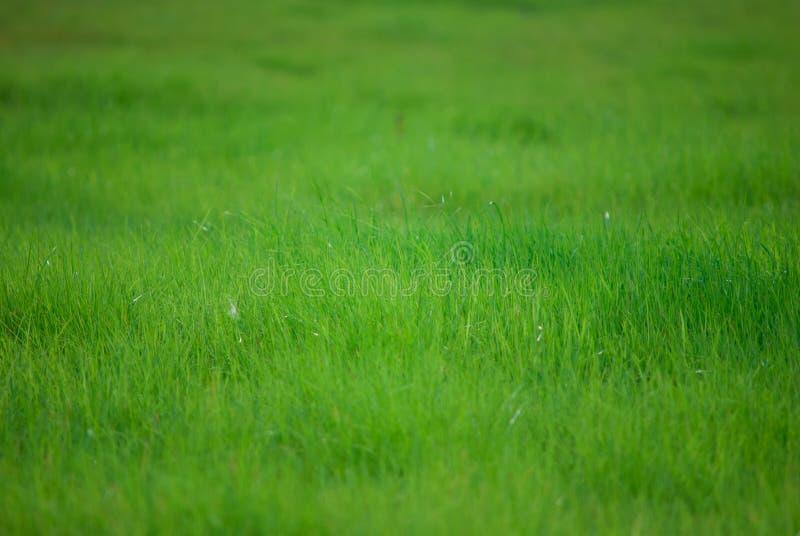 Download Groen gras stock afbeelding. Afbeelding bestaande uit groen - 54090201