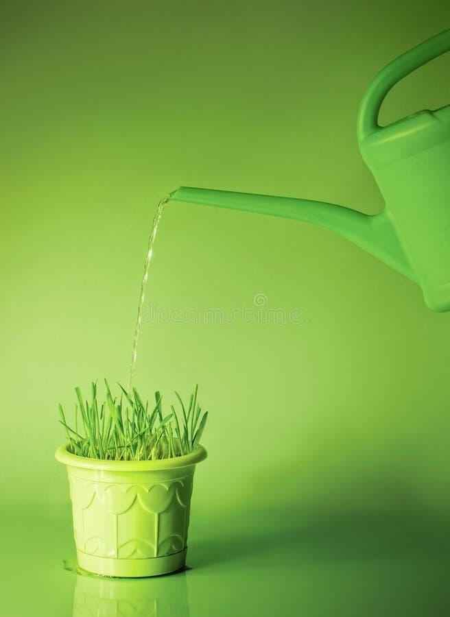 Groen gras in bloempot en gieter royalty-vrije stock afbeelding