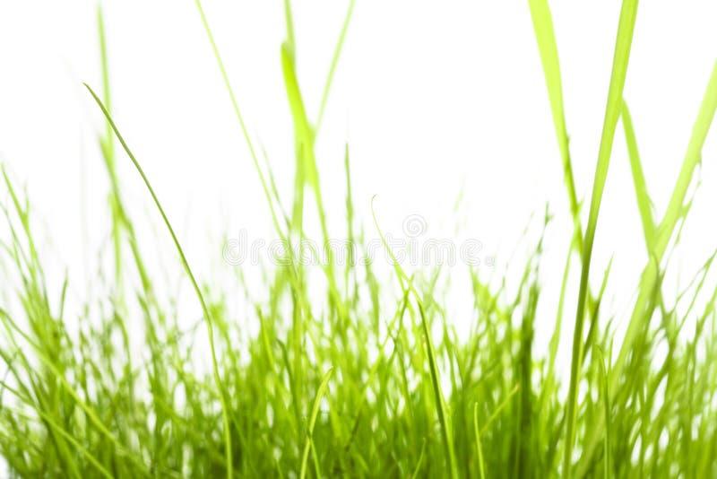 Groen Gras dat op wit wordt geïsoleerd¯ stock afbeelding