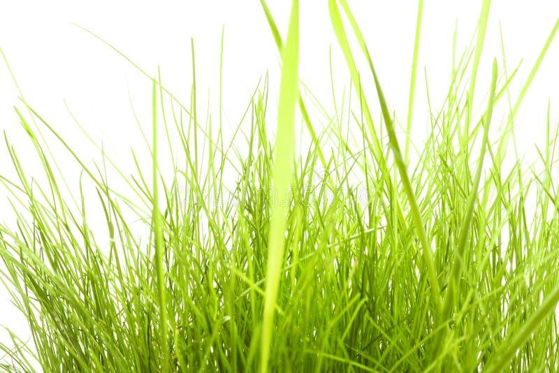 Groen Gras dat op wit wordt geïsoleerdr stock afbeeldingen