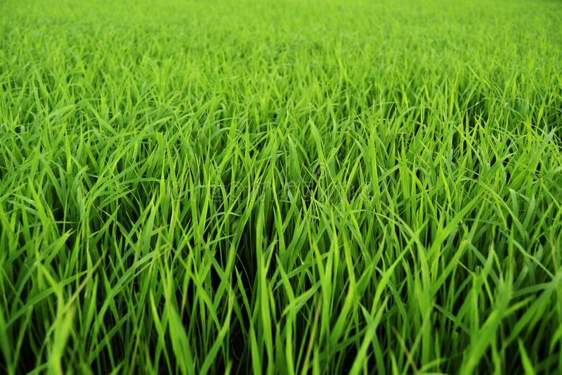 Groen gras, de lentetijd stock fotografie