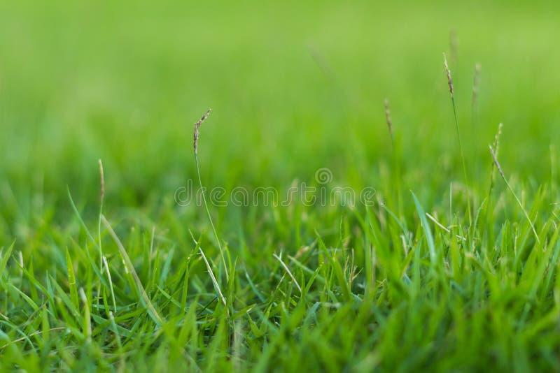 Groen gras in de tuin stock foto's