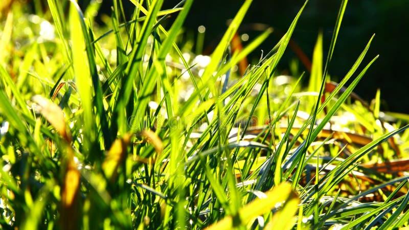 Groen gras in de zomer stock afbeeldingen