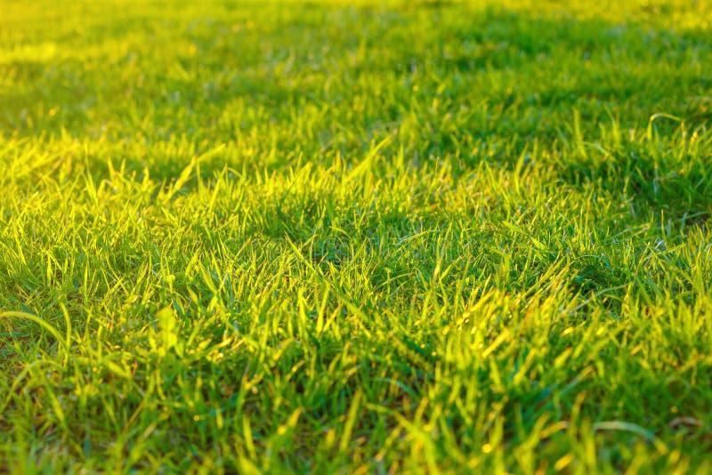 Groen gras in de zon, achtergrond stock afbeeldingen