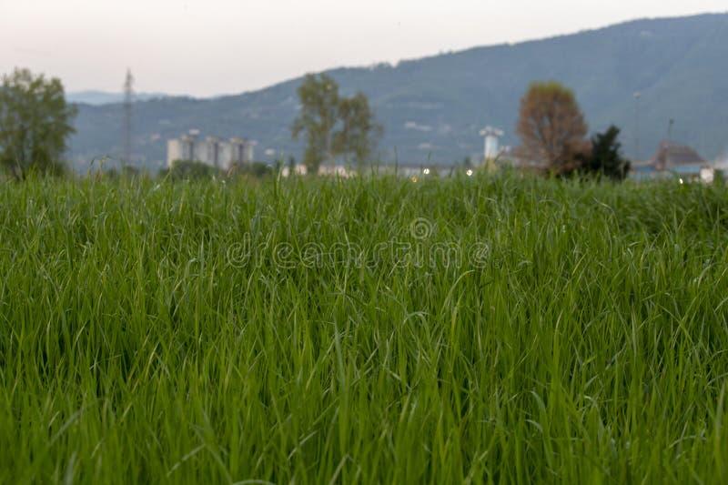 Groen gras dichtbij de stad royalty-vrije stock afbeeldingen