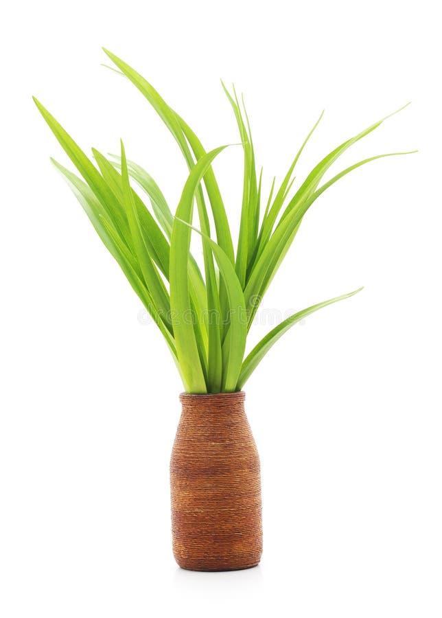 Groen gras in een vaas stock foto's
