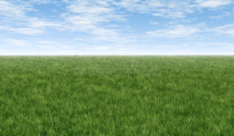 Groen gras en blauwe hemel vector illustratie