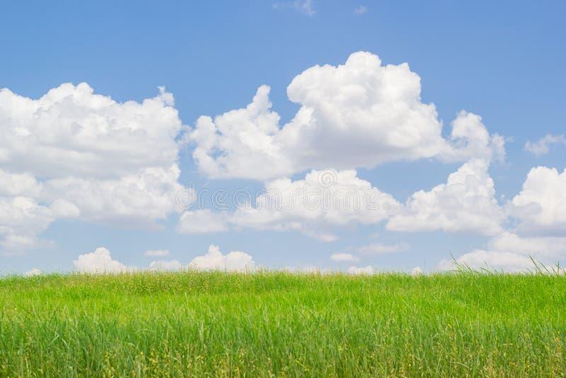 Groen gras en blauwe hemel met wolken stock foto