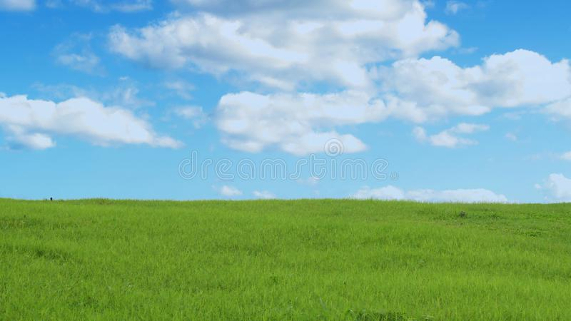 Groen gras en blauwe hemel met wolken royalty-vrije stock foto