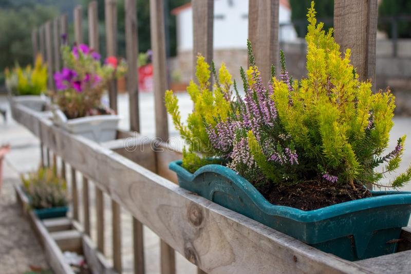 Groen gras en bloeiende bloemen in bloempotten op omheining Bloemcontainers op houten omheining in perspectief Terrasontwerp royalty-vrije stock afbeelding