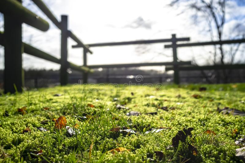 Groen gras en mos met droge gevallen bladeren in de ochtendzon in de binnenplaats, tegen een vage achtergrond van de omheining royalty-vrije stock afbeeldingen