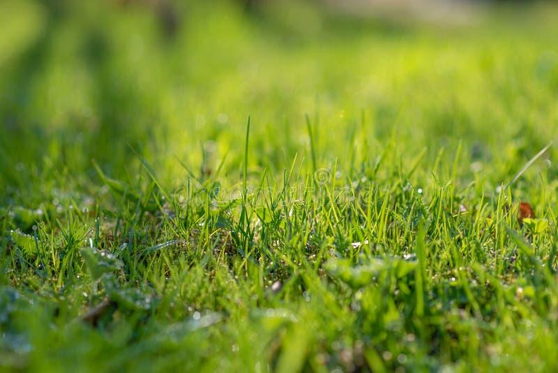 Groen gras het gras beweegt van de wind Vage achtergrond royalty-vrije stock foto