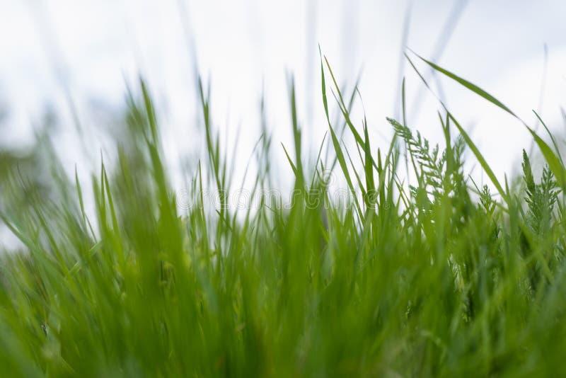 Groen gras het gras beweegt van de wind Vage achtergrond royalty-vrije stock afbeeldingen