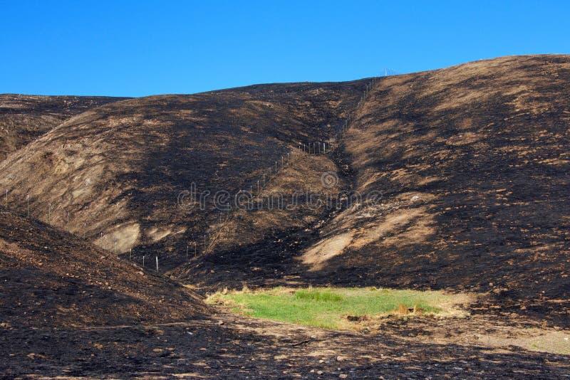 Groen gras in het midden van brand verkoolde vallei blauwe hemel stock foto's