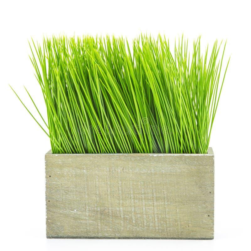 Groen gras in houten bloempot stock foto
