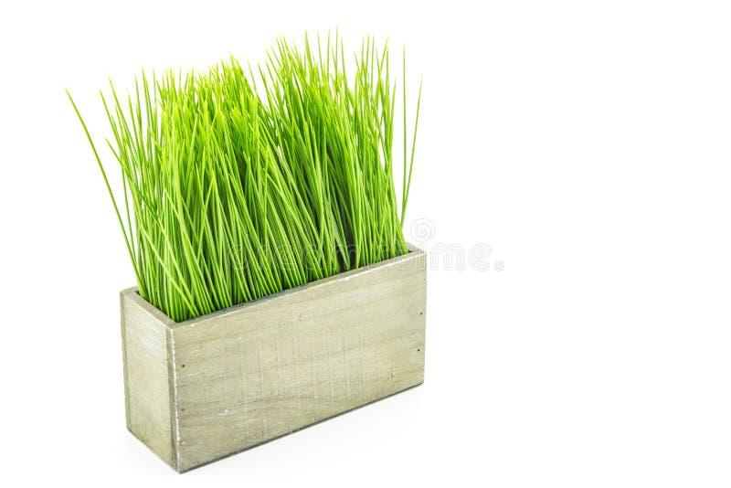 Groen gras in houten bloempot stock afbeelding
