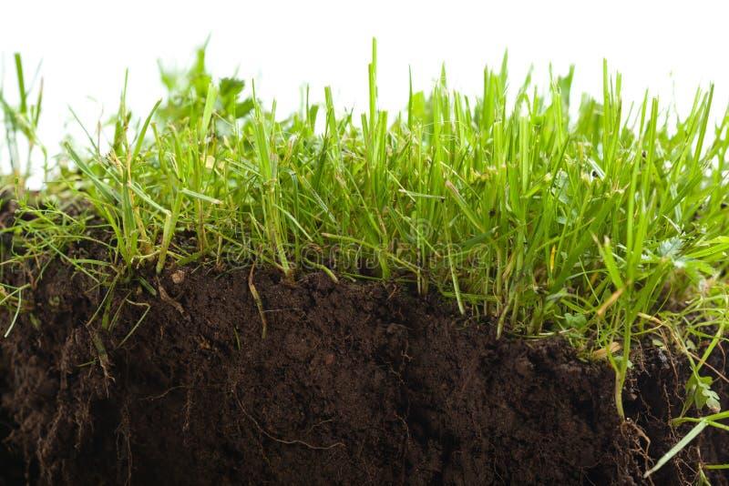 Groen gras met aarde crosscut stock afbeeldingen