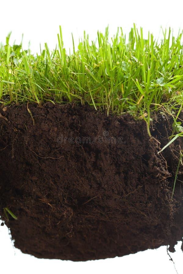 Groen gras met aarde crosscut royalty-vrije stock foto's