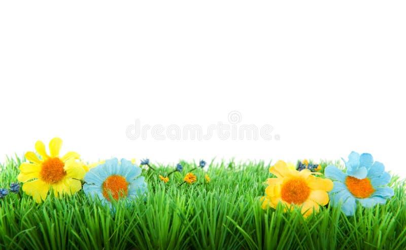 Groen gras met bloemen stock fotografie