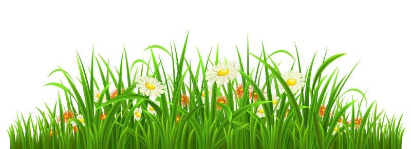 Groen gras met bloemen stock illustratie