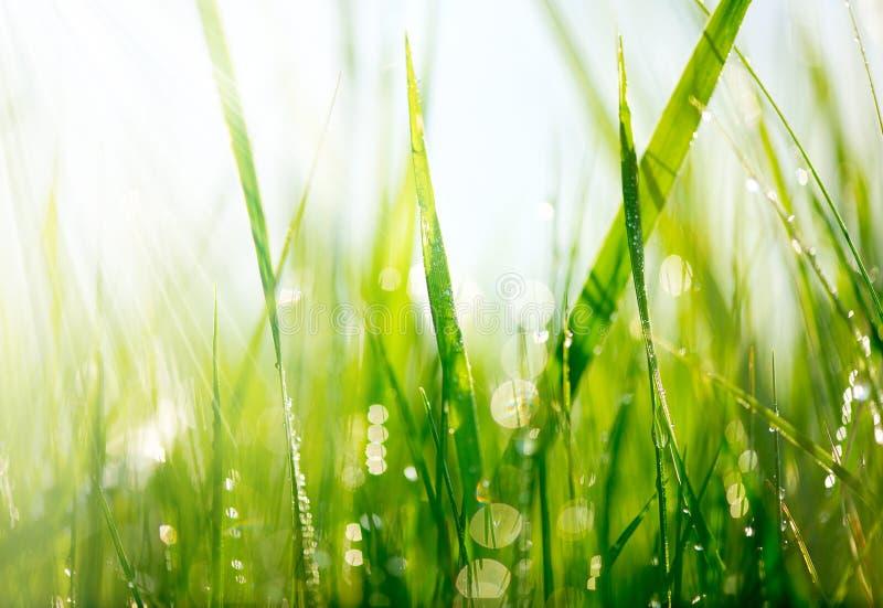 Groen gras met dauwdalingen royalty-vrije stock foto's