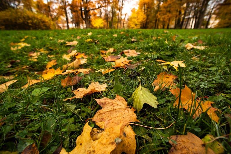 Groen gras met gele de herfstbladeren royalty-vrije stock fotografie