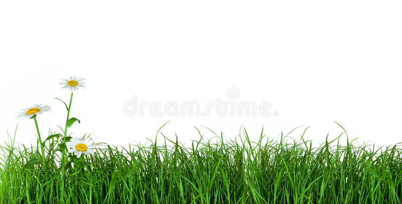 Groen gras met madeliefjebloemen stock foto's