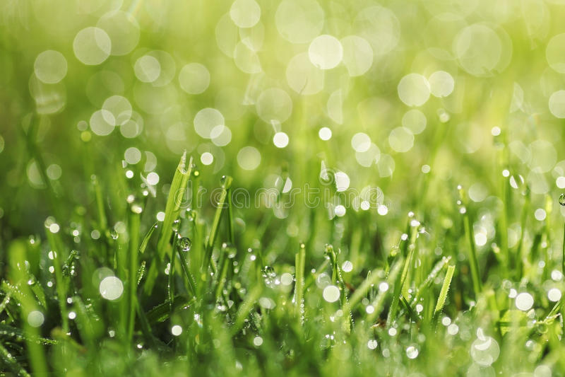 Groen gras met ochtenddauw stock foto's