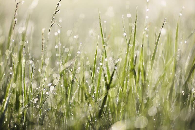 Groen gras met ochtenddauw in heldere zon met de achtergrond van de bokehtextuur stock fotografie