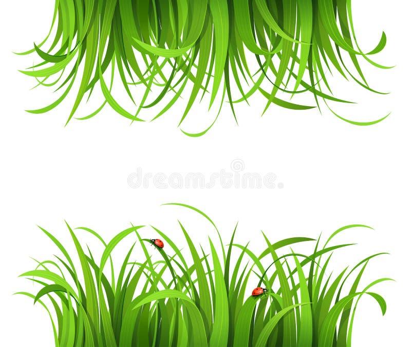 Groen gras met onzelieveheersbeestjes stock illustratie