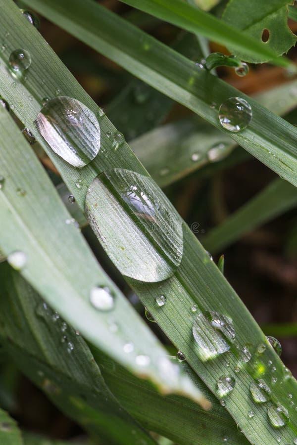 Groen gras met regendalingen royalty-vrije stock foto