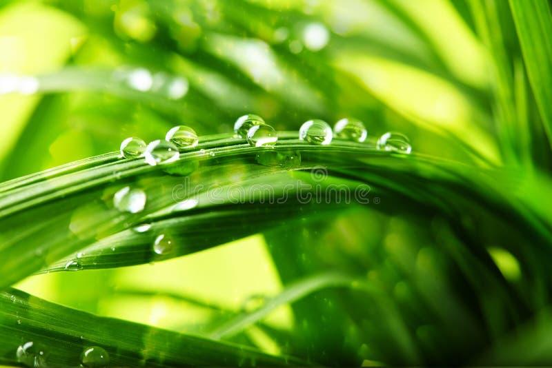 Groen gras met waterdalingen royalty-vrije stock foto